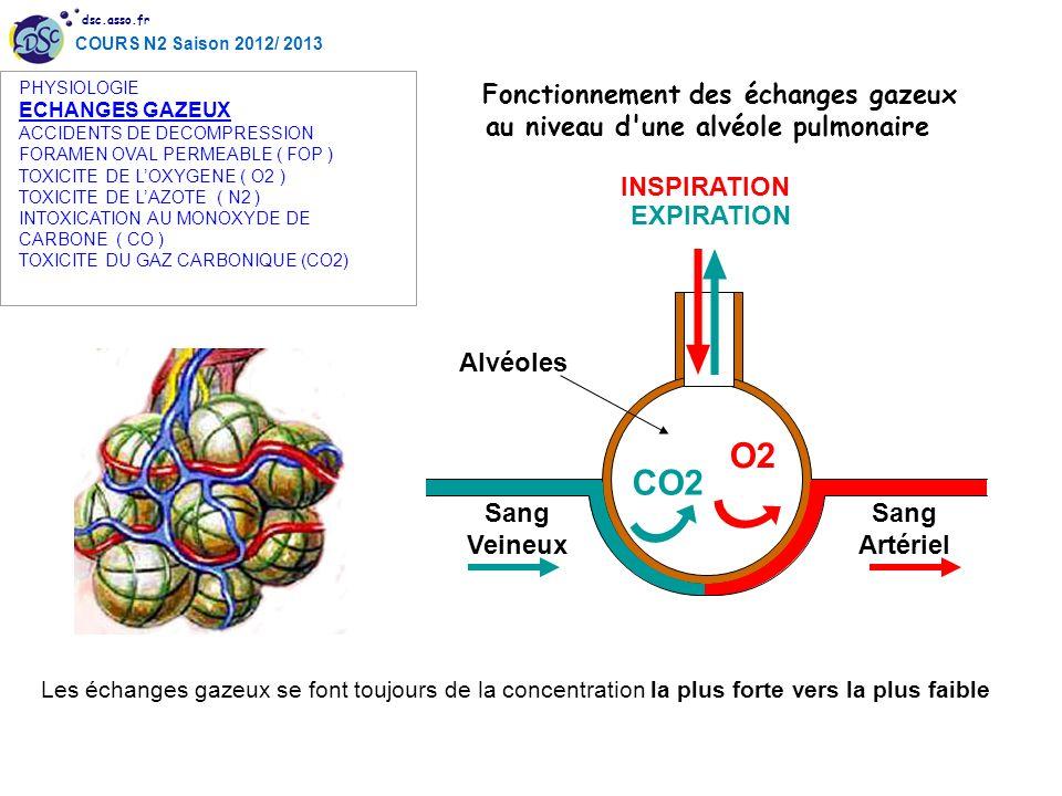 dsc.asso.fr COURS N2 Saison 2012/ 2013 O2 CO2 Sang Veineux Sang Artériel Alvéoles INSPIRATION EXPIRATION Fonctionnement des échanges gazeux au niveau