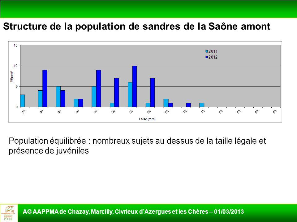 Structure de la population de sandres de la Saône amont AG AAPPMA de Chazay, Marcilly, Civrieux dAzergues et les Chères – 01/03/2013 Population équili