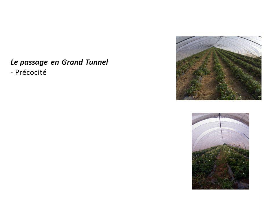 Le passage en Grand Tunnel - Précocité