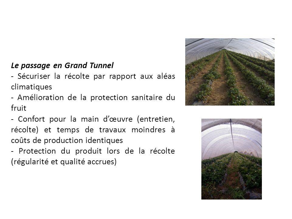 Le passage en Grand Tunnel - Sécuriser la récolte par rapport aux aléas climatiques - Amélioration de la protection sanitaire du fruit - Confort pour