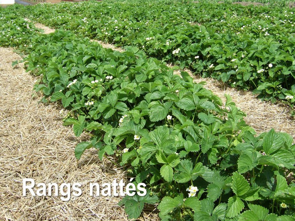 Dans quelle mesure est-ce que vous réussissez à allonger la saison de récolte avec les grands tunnels ?