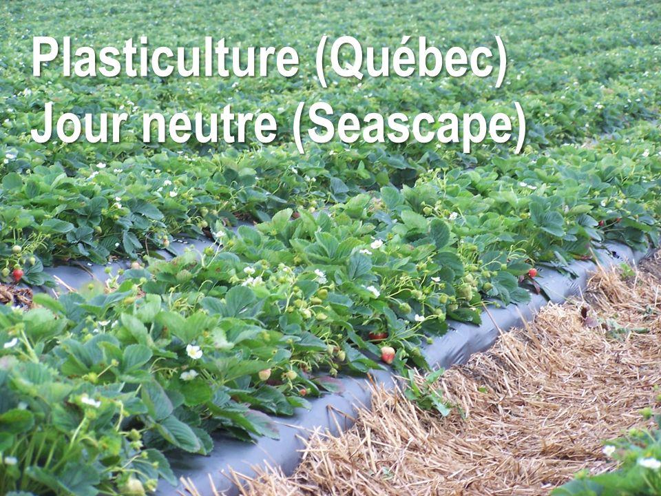 Plasticulture (Québec) Jour neutre (Seascape)