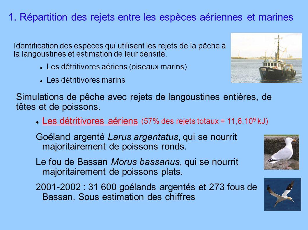1. Répartition des rejets entre les espèces aériennes et marines Identification des espèces qui utilisent les rejets de la pêche à la langoustines et