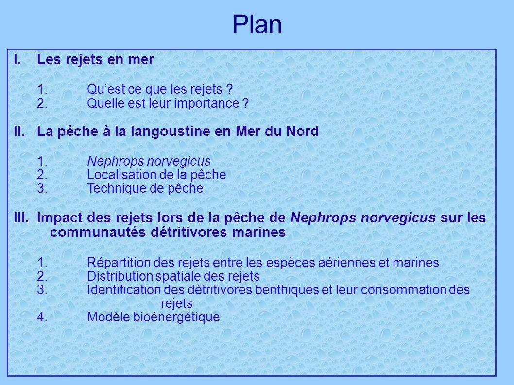 Plan I.Les rejets en mer 1.Quest ce que les rejets ? 2.Quelle est leur importance ? II. La pêche à la langoustine en Mer du Nord 1. Nephrops norvegicu