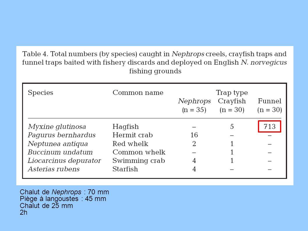 Chalut de Nephrops : 70 mm Piège à langoustes : 45 mm Chalut de 25 mm 2h