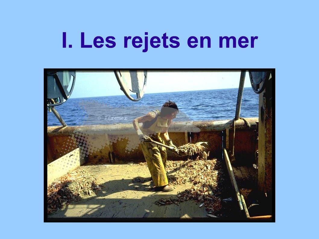 Réglementations sur les rejets Rapport du Parlement européen visant à « lélimination progressive des rejets de pêches dans lUnion Européenne».