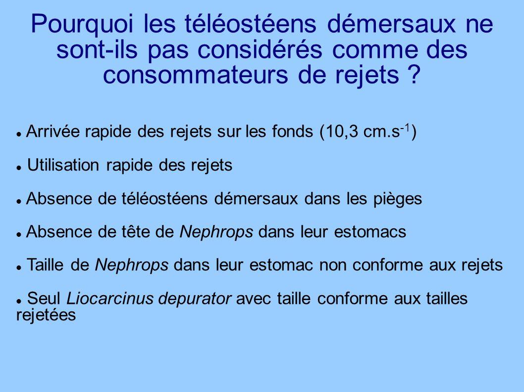 Pourquoi les téléostéens démersaux ne sont-ils pas considérés comme des consommateurs de rejets ? Arrivée rapide des rejets sur les fonds (10,3 cm.s -