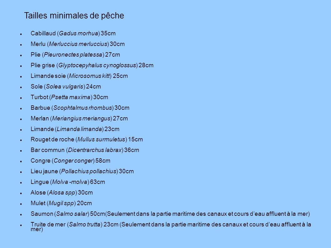 Cabillaud (Gadus morhua) 35cm Merlu (Merluccius merluccius) 30cm Plie (Pleuronectes platessa) 27cm Plie grise (Glyptocepyhalus cynoglossus) 28cm Liman