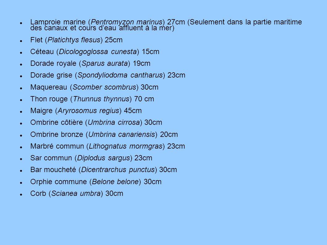 Lamproie marine (Pentromyzon marinus) 27cm (Seulement dans la partie maritime des canaux et cours deau affluent à la mer) Flet (Platichtys flesus) 25c