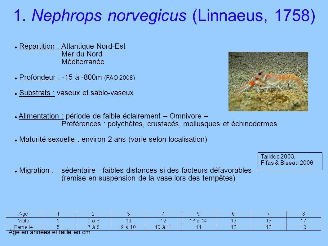 1. Nephrops norvegicus (Linnaeus, 1758) Répartition :Atlantique Nord-Est Mer du Nord Méditerranée Profondeur : -15 à -800m (FAO 2008) Substrats : vase