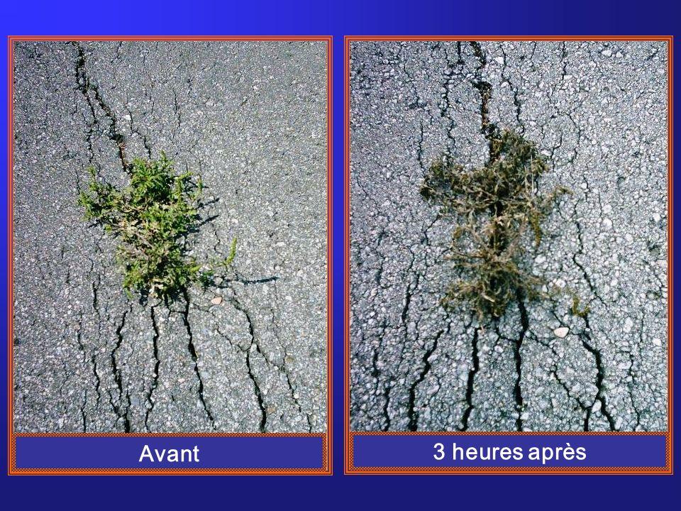 Avant / Après, île DOrléans, MTQ