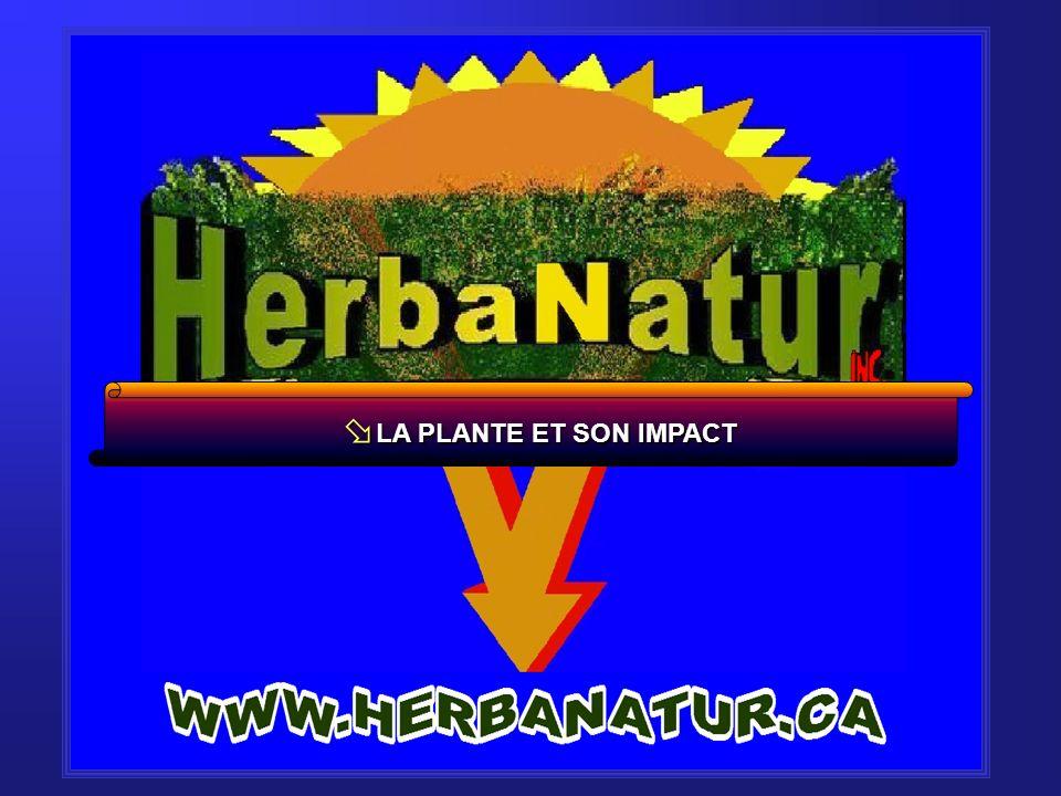ø L A PLANTE ET SON IMPACT R RECHERCHE & DÉVELOPPEMENT (1994-2005) L LE PLAN DACTION COLLECTIF PROVINCIAL (2006-2010) PÉRIODE DE QUESTIONS