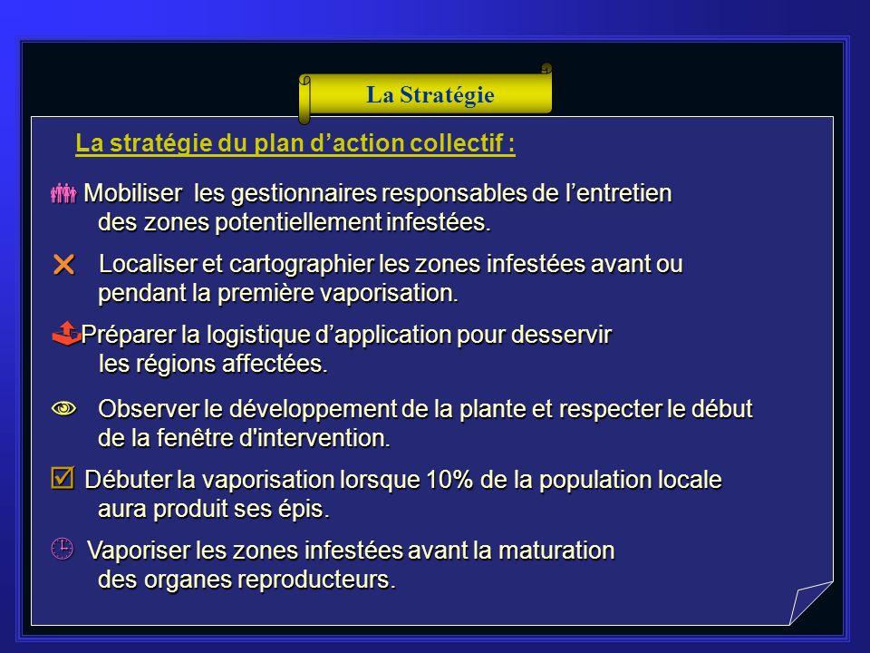 STRATÉGIE & PRÉVISIONS (2006-2010)