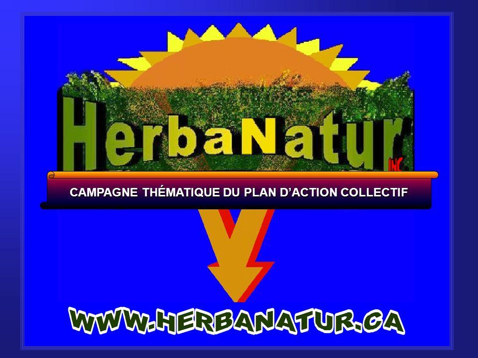 - Après 15 ans, le couvert végétal environnant Long terme : - Après 15 ans, le couvert végétal environnant devrait avoir pris la place de l Ambrosia.