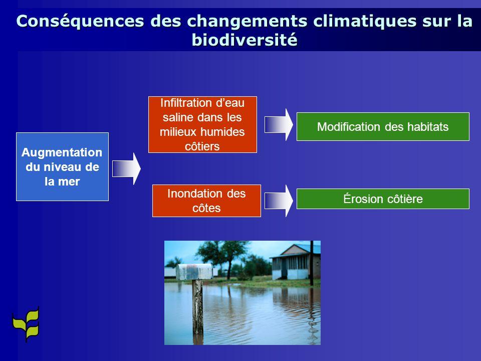 Augmentation du niveau de la mer Infiltration deau saline dans les milieux humides côtiers Inondation des côtes Modification des habitats Érosion côtière Conséquences des changements climatiques sur la biodiversité