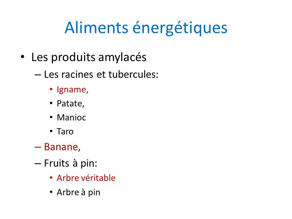 Aliments énergétiques Les produits amylacés – Les racines et tubercules: Igname, Patate, Manioc Taro – Banane, – Fruits à pin: Arbre véritable Arbre à
