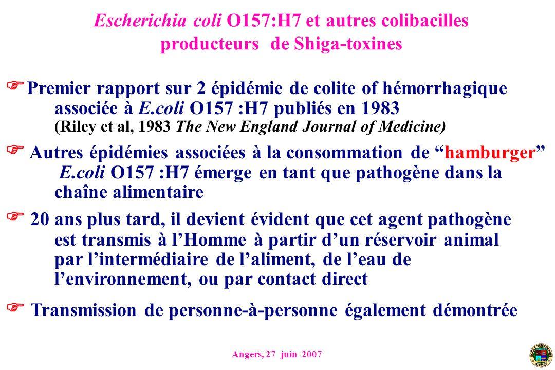 Angers, 27 juin 2007 Escherichia coli O157:H7 et autres colibacilles producteurs de Shiga-toxines Premier rapport sur 2 épidémie de colite of hémorrhagique associée à E.coli O157 :H7 publiés en 1983 (Riley et al, 1983 The New England Journal of Medicine) Autres épidémies associées à la consommation de hamburger E.coli O157 :H7 émerge en tant que pathogène dans la chaîne alimentaire 20 ans plus tard, il devient évident que cet agent pathogène est transmis à lHomme à partir dun réservoir animal par lintermédiaire de laliment, de leau de lenvironnement, ou par contact direct Transmission de personne-à-personne également démontrée
