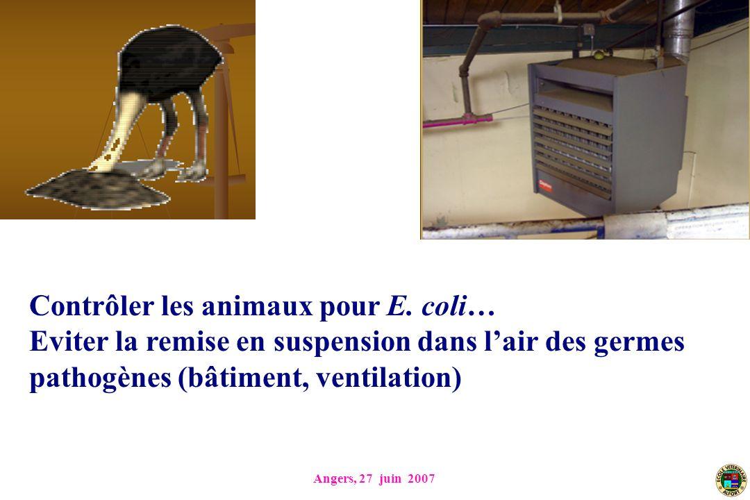 Angers, 27 juin 2007 Contrôler les animaux pour E. coli… Eviter la remise en suspension dans lair des germes pathogènes (bâtiment, ventilation)