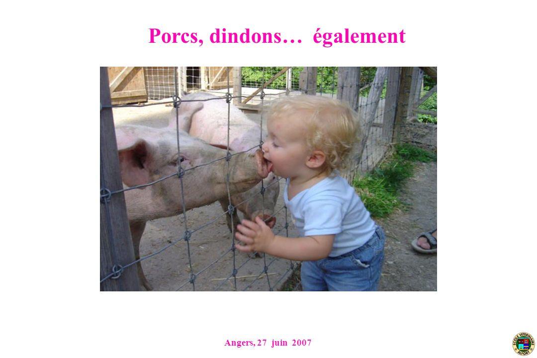 Angers, 27 juin 2007 Porcs, dindons… également