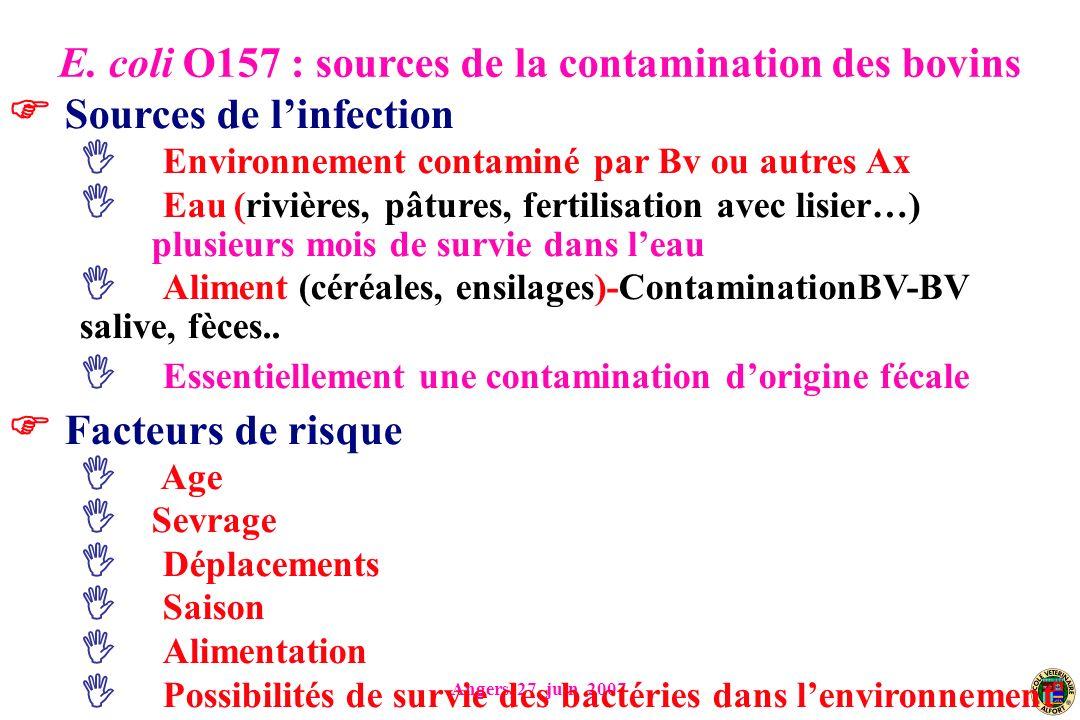 Angers, 27 juin 2007 Sources de linfection Environnement contaminé par Bv ou autres Ax Eau (rivières, pâtures, fertilisation avec lisier…) plusieurs mois de survie dans leau Aliment (céréales, ensilages)-ContaminationBV-BV salive, fèces..