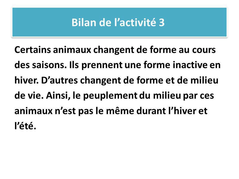 Bilan de lactivité 3 Certains animaux changent de forme au cours des saisons. Ils prennent une forme inactive en hiver. Dautres changent de forme et d