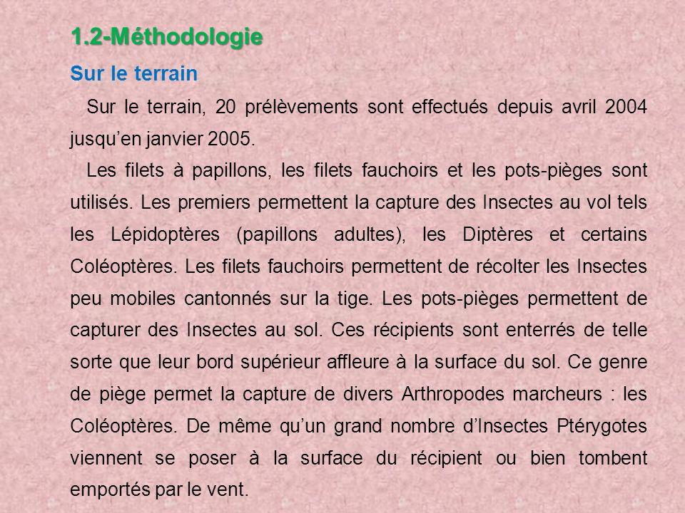 1.2-Méthodologie Sur le terrain Sur le terrain, 20 prélèvements sont effectués depuis avril 2004 jusquen janvier 2005. Les filets à papillons, les fil