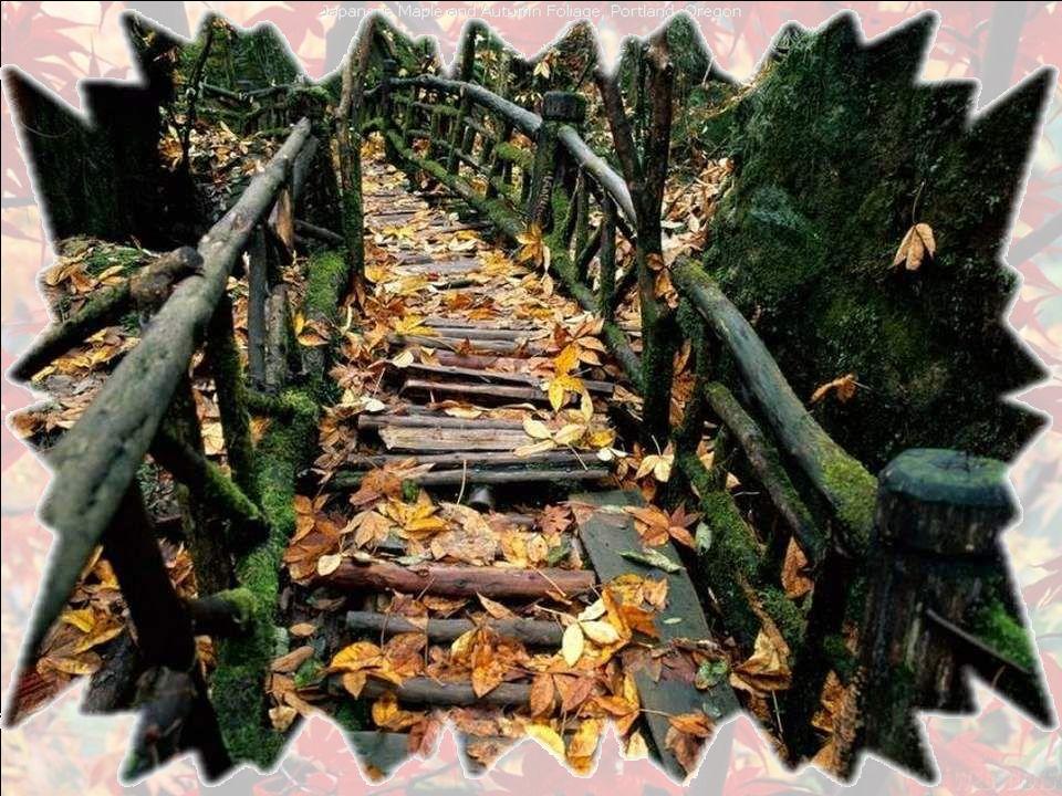 Lautomne, cest le ruisseau Où se laissent porter les feuilles mortes Vers un cimetière bienheureux Alors que le friselis des ondes Emprunte de airs de De Profundis.