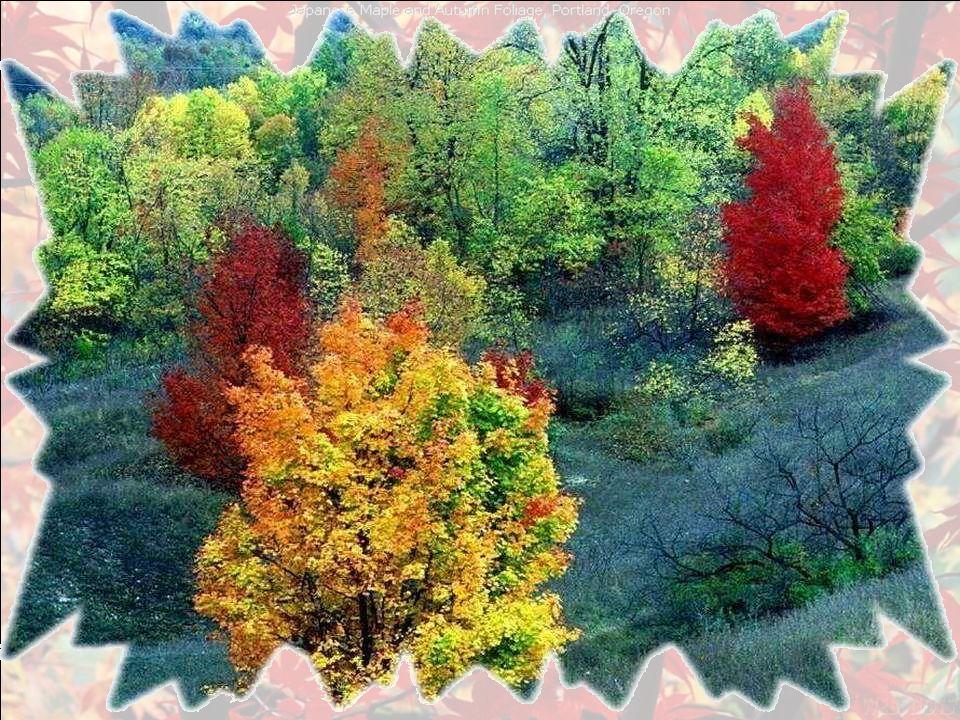 Lautomne cest ma saison. Ses splendeurs colorées mémerveillent.