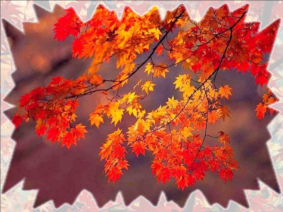 Lautomne, cest ma chanson. Le bruissement des feuilles qui grelottent.