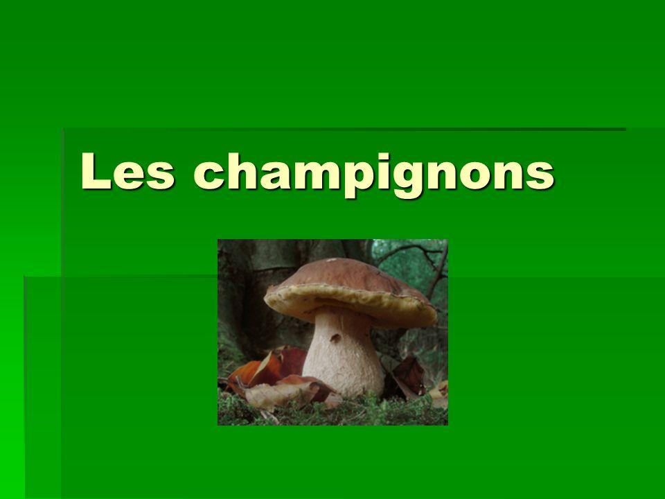 Ce quil faut savoir… Depuis 2002, les champignons comestibles sont assimilés aux autres denrées alimentaires en matière de responsabilité.