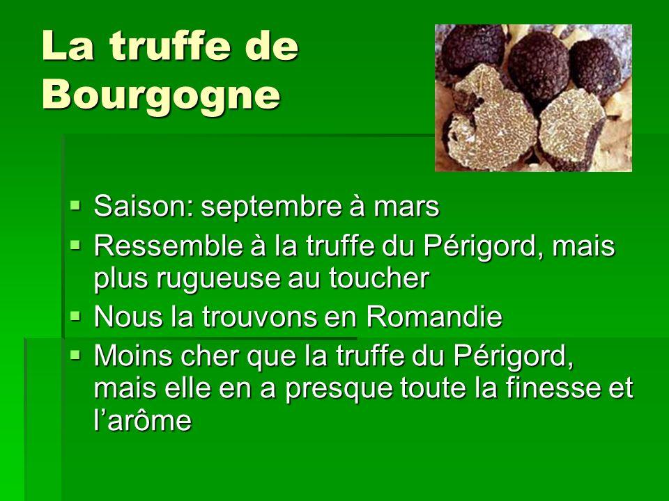 La truffe de Bourgogne Saison: septembre à mars Saison: septembre à mars Ressemble à la truffe du Périgord, mais plus rugueuse au toucher Ressemble à