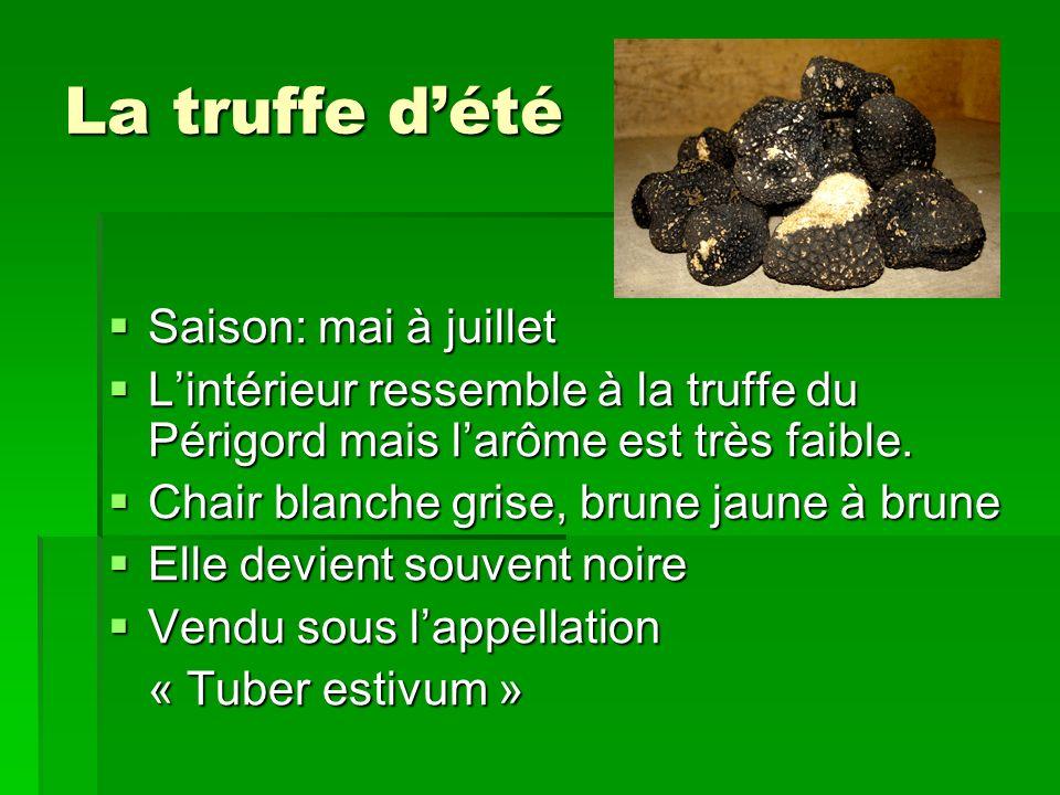 La truffe dété Saison: mai à juillet Saison: mai à juillet Lintérieur ressemble à la truffe du Périgord mais larôme est très faible. Lintérieur ressem