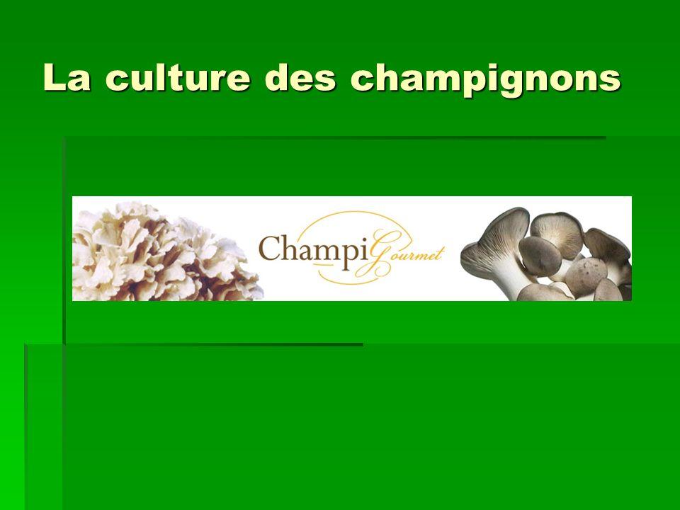 La culture des champignons