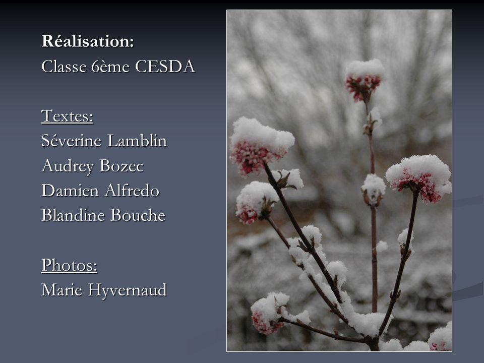 Réalisation: Classe 6ème CESDA Textes: Séverine Lamblin Audrey Bozec Damien Alfredo Blandine Bouche Photos: Marie Hyvernaud