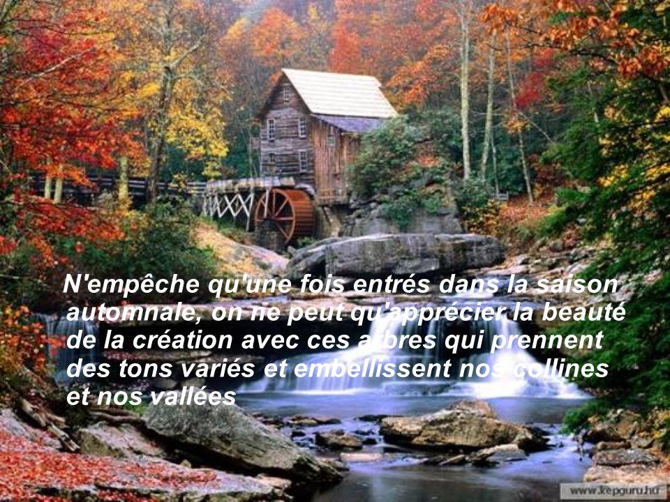 L'automne qui suit nous invite à de grandes randonnées dans les bois pour admirer un festival de couleurs parmi la variété d'arbres qui jalonnent les