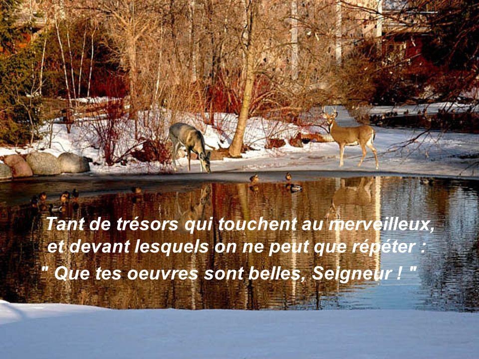 Tant de trésors qui touchent au merveilleux, et devant lesquels on ne peut que répéter : Que tes oeuvres sont belles, Seigneur .