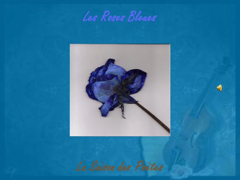 Les Roses Bleues La Saison des Poètes