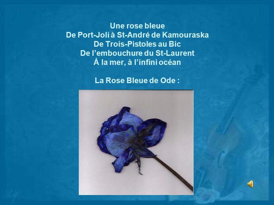 Une rose bleue De Port-Joli à St-André de Kamouraska De Trois-Pistoles au Bic De lembouchure du St-Laurent À la mer, à linfini océan La Rose Bleue de
