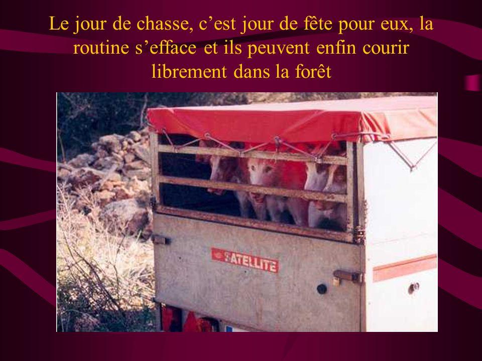 Ensuite, pendant la saison de la chasse ils sont alimentés plus régulièrement, pour quils ne mangent pas les lapins chassés.
