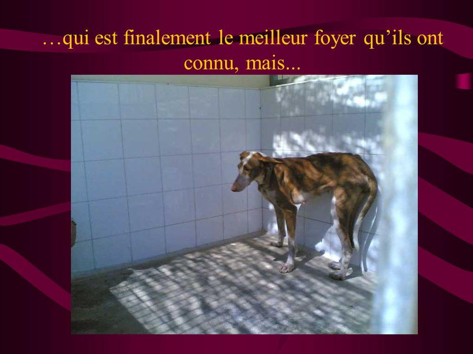 Les chiens « pas utiles » finissent écrasés, tués par leurs maîtres, ou… à la fourrière,