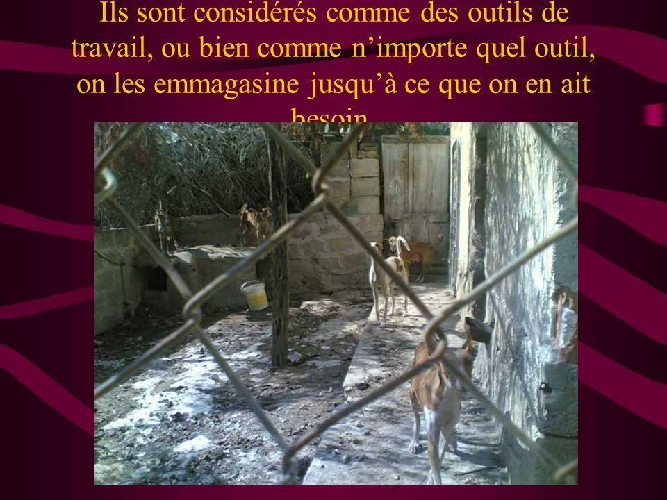 Un ami cest pour toujours....ou pas Malheureusement, la réalité dans ce pays, est quil y a des chiens qui ne sont pas considérés comme des amis.