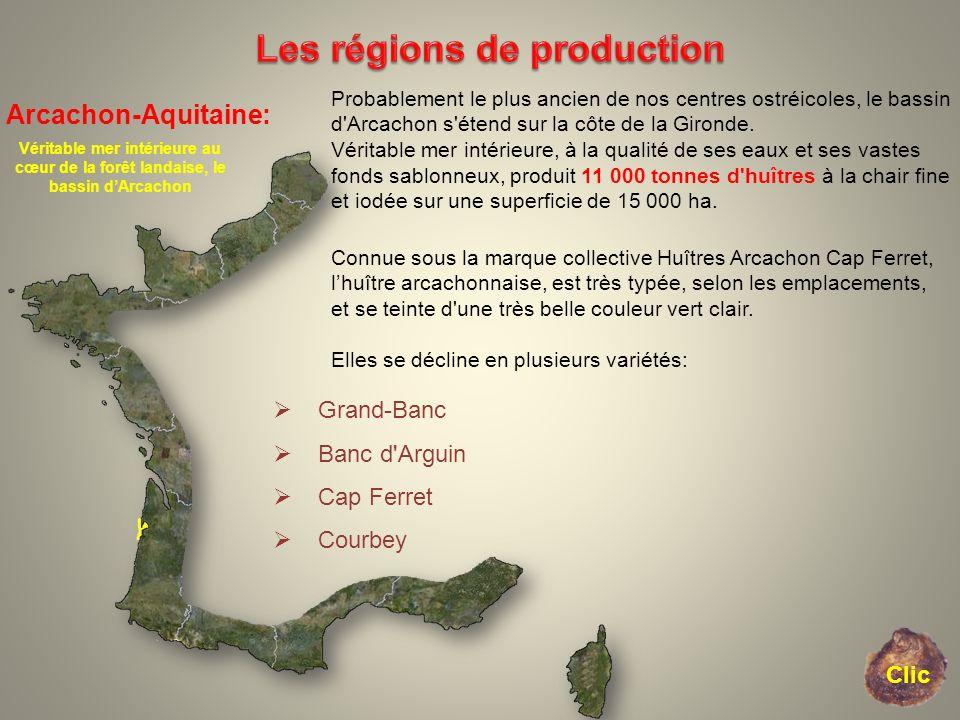 Arcachon-Aquitaine: Véritable mer intérieure au cœur de la forêt landaise, le bassin dArcachon Probablement le plus ancien de nos centres ostréicoles,