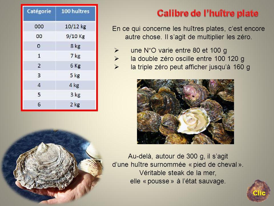 En ce qui concerne les huîtres plates, cest encore autre chose. Il sagit de multiplier les zéro. une N°O varie entre 80 et 100 g la double zéro oscill
