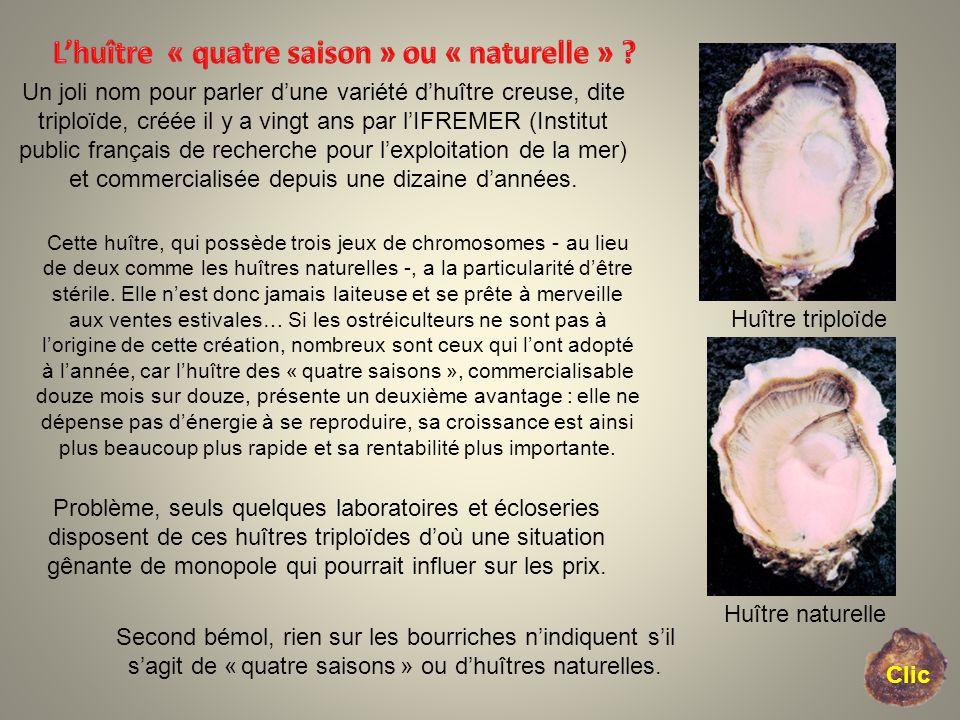Clic. Un joli nom pour parler dune variété dhuître creuse, dite triploïde, créée il y a vingt ans par lIFREMER (Institut public français de recherche