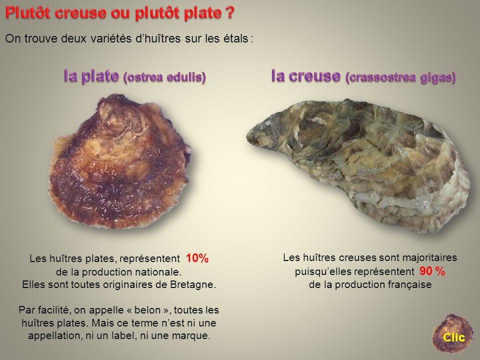On trouve deux variétés dhuîtres sur les étals : Les huîtres creuses sont majoritaires puisquelles représentent 90 % de la production française Les hu