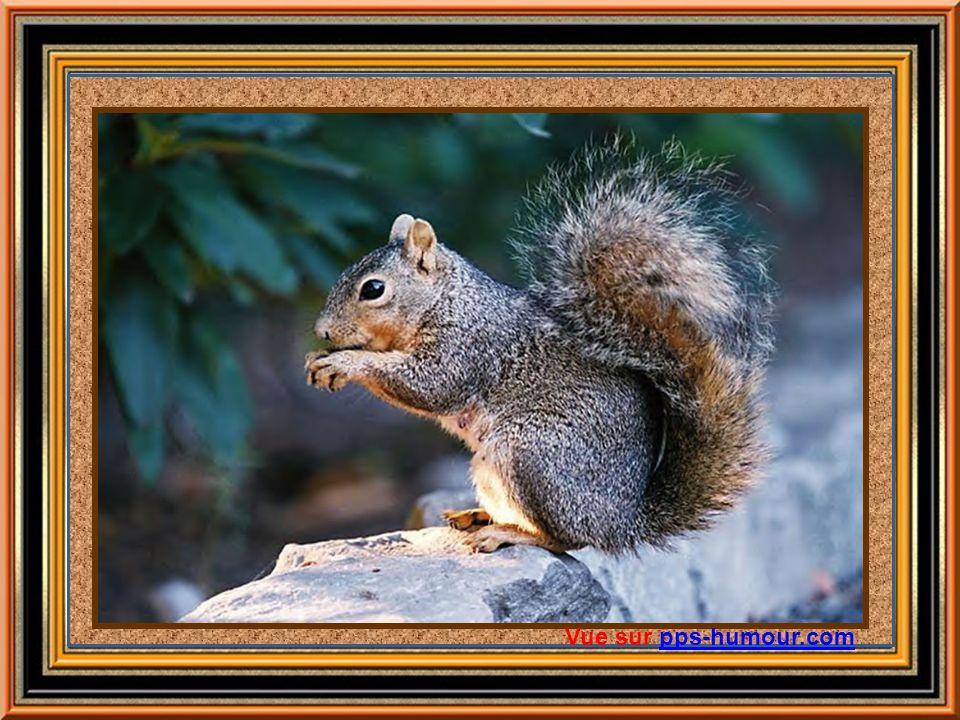 Découverte du sirop dérable Une légende raconte quun petit écureuil grimpa le long dun tronc darbre et mordit une branche... et se mit à boire. Un Amé