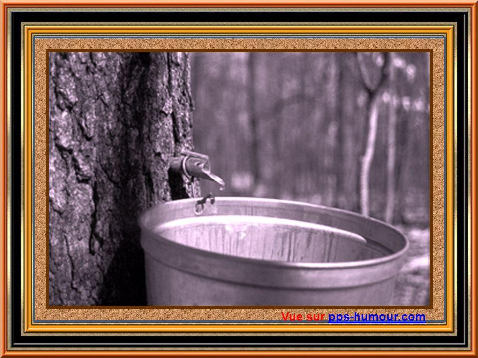 Le frère Marie –Victorin, grand naturaliste et savant québécois, auteur illustre de la Flore laurentienne, affirme carrément que les Amérindiens appri