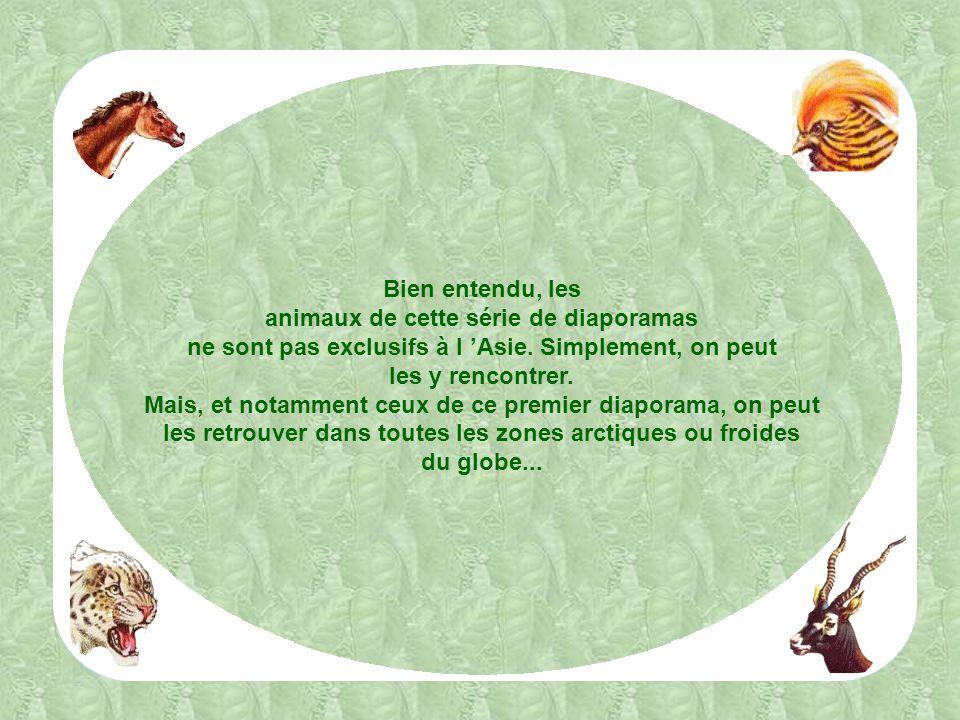 Il existe dans le monde deux espèces de chameaux présentant de nombreux points communs et dont le croisement peut donner de bons résultats : le chameau proprement dit, ou chameau de Bactriane, typiquement asiatique, et le dromadaire africain.