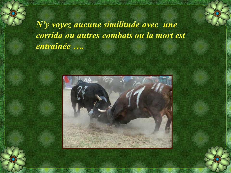 Ny voyez aucune similitude avec une corrida ou autres combats ou la mort est entraînée ….