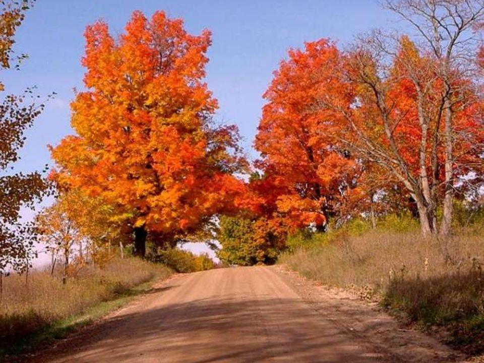 Les nouvelles sont comme les feuilles d'automne. Le vent qui les porte les malmène. (Christian Bobin)
